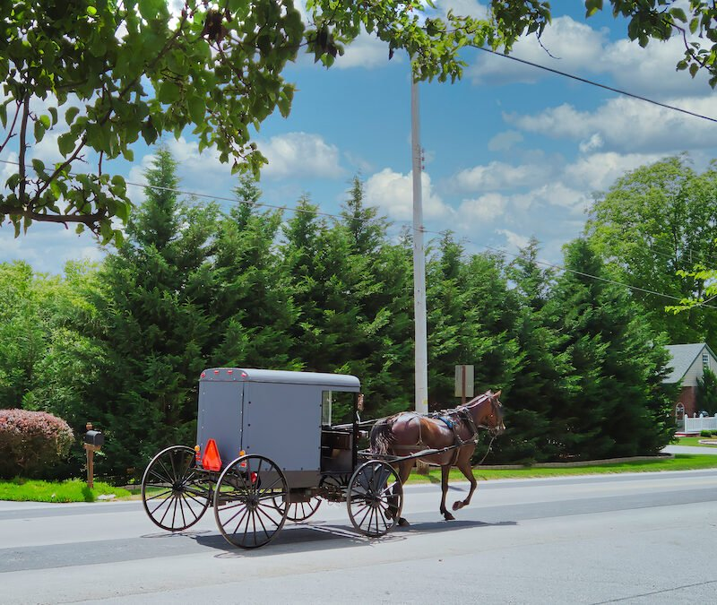 Amish horse and buggy.