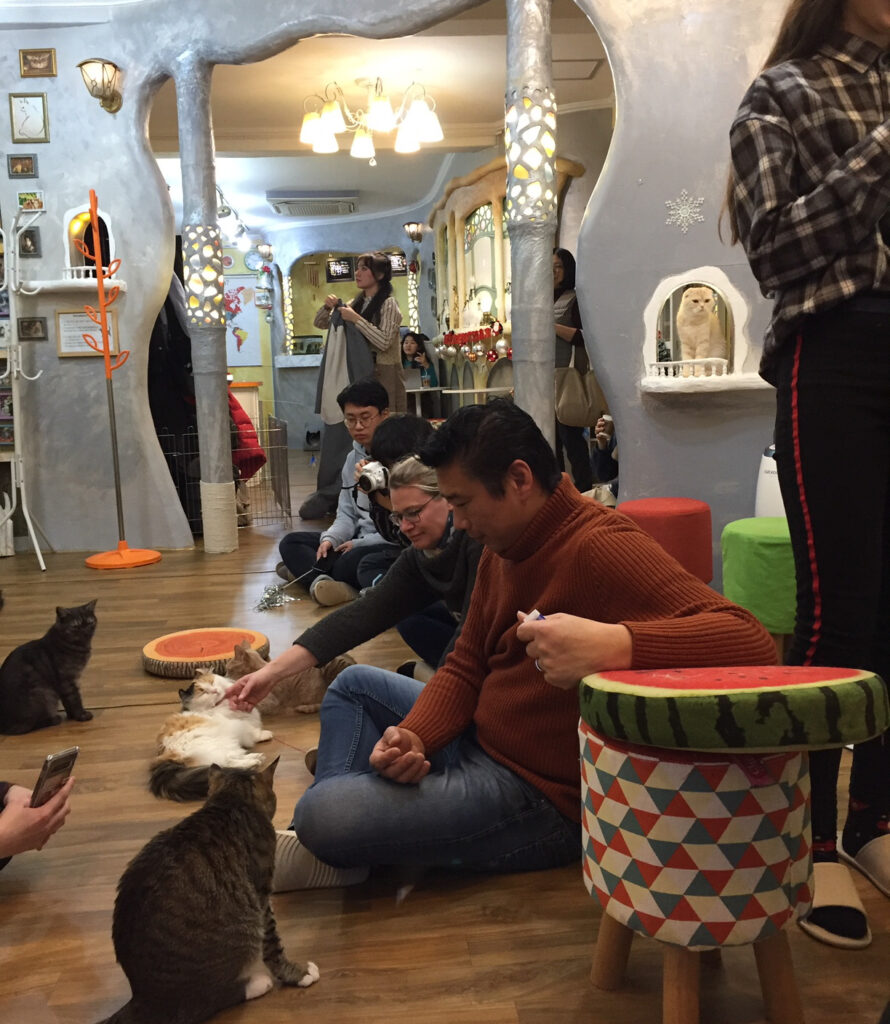2 Cats Cafe in Seoul, South Korea.