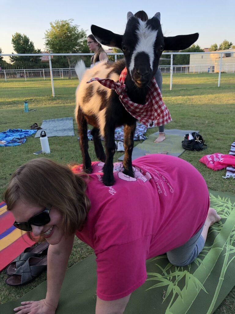 The writer doing goat yoga.