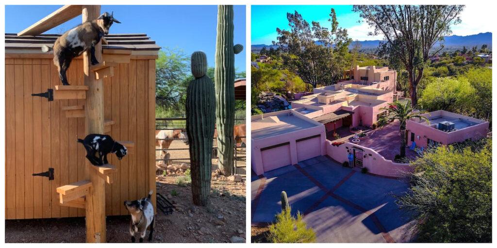 5-Acre Cowboy Hideaway With Mini Donkeys in Arizona.