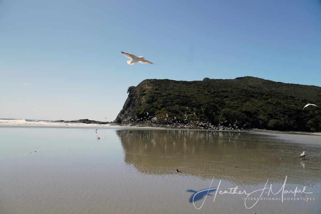 90-Mile Beach near Kerikeri, New Zealand.