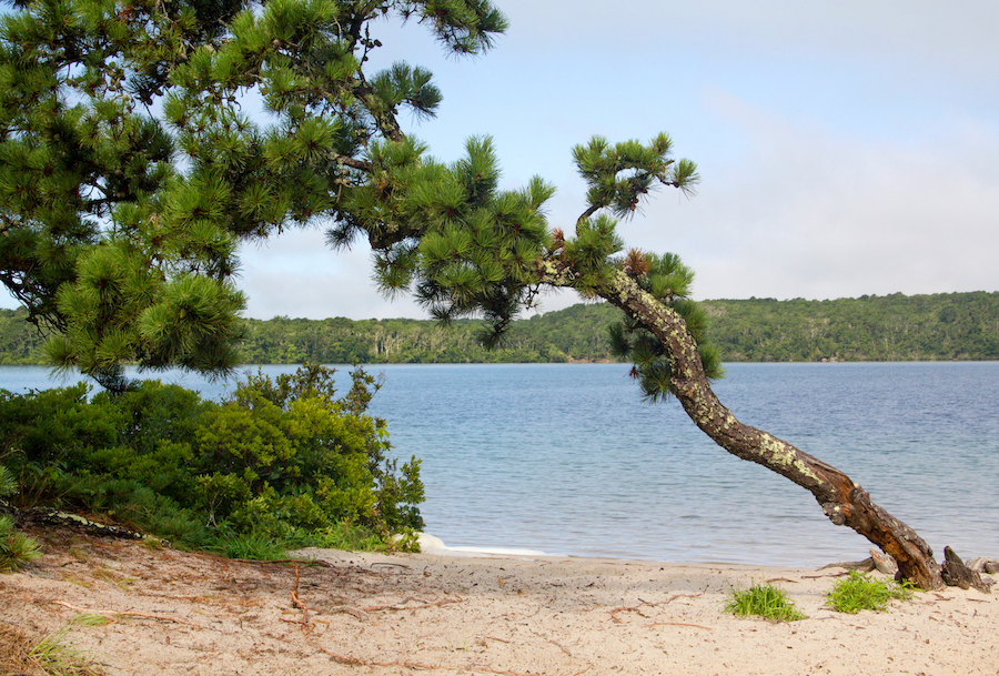 A beach in Nickerson State Park, Massachusetts.