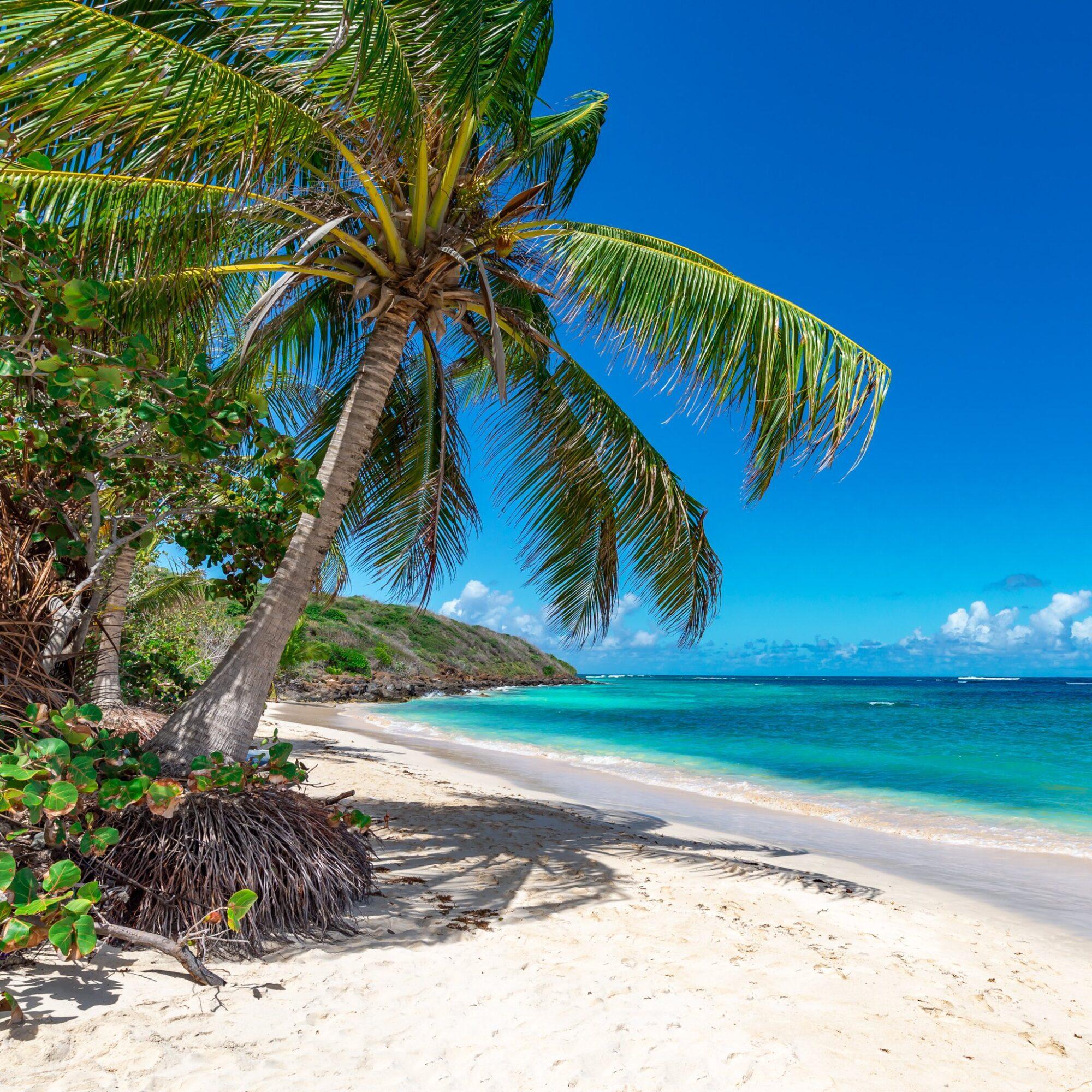 A beach in Puerto Rico.
