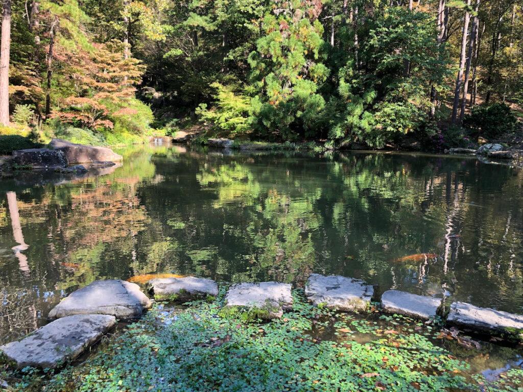 A beautiful pond in Garvan Gardens.