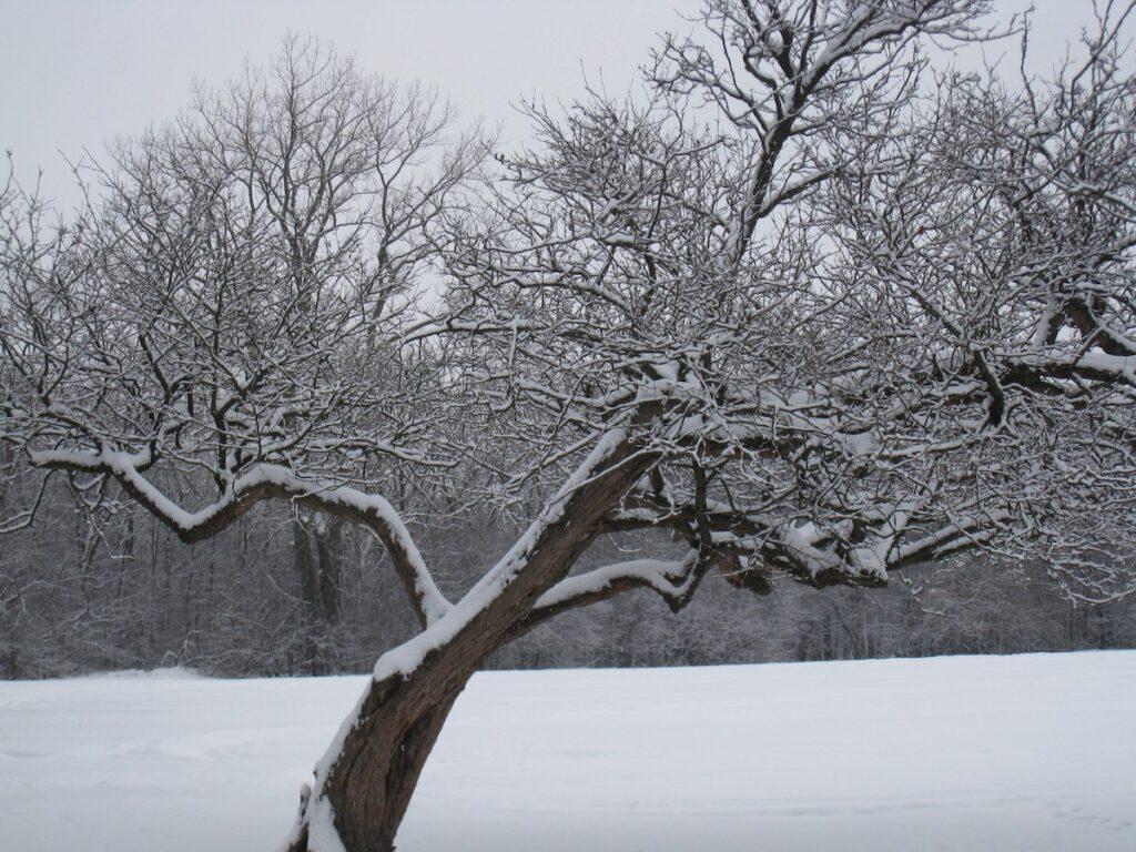 A beautiful snowy landscape.