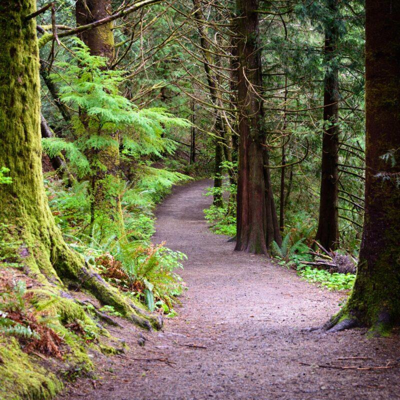 A beautiful trail in Washington state.