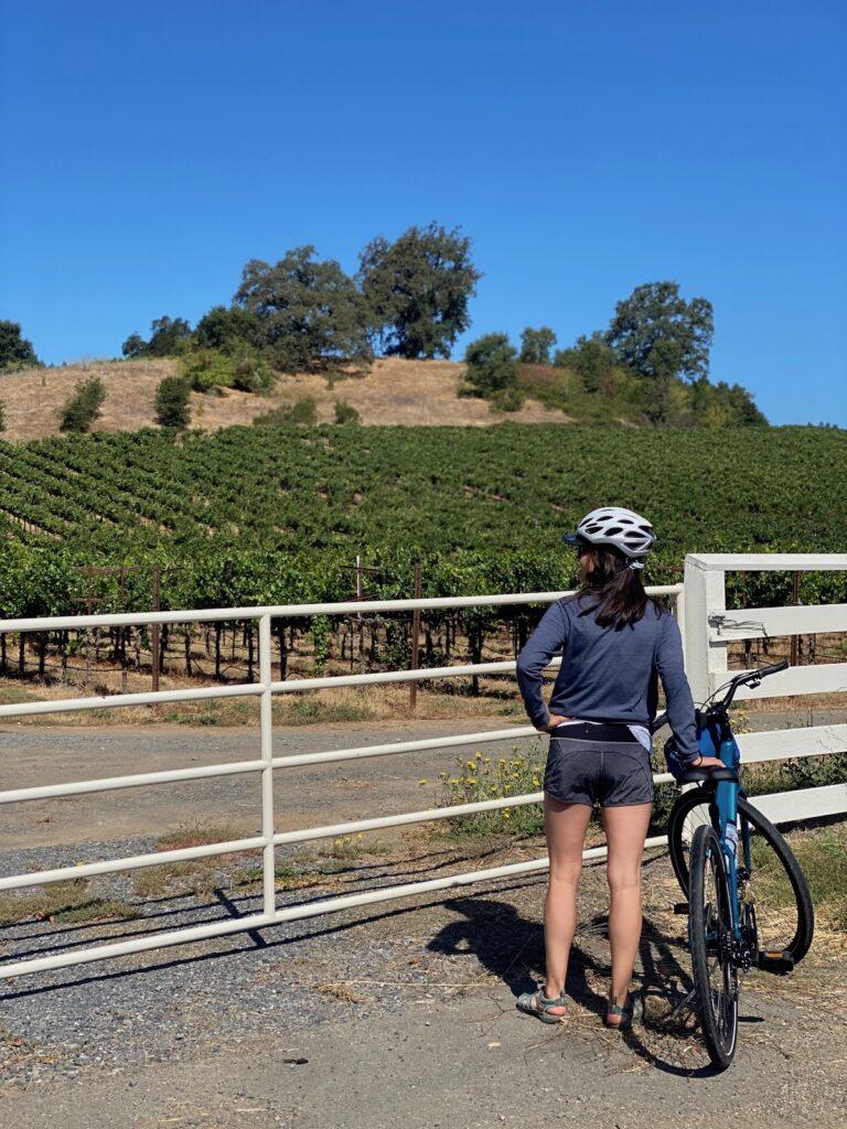 A bike ride along Dry Creek Valley.
