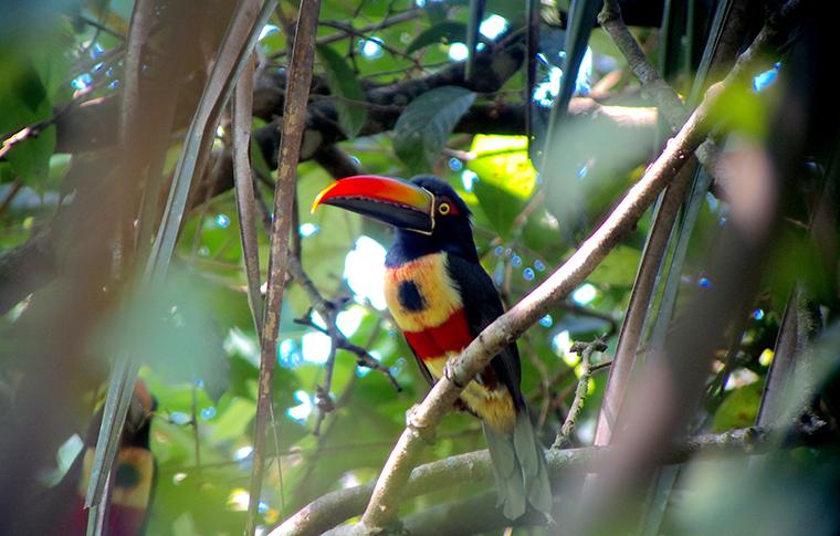 A bird in Manuel Antonio National Park.