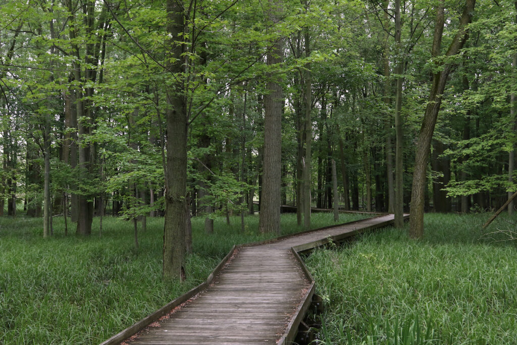 A boardwalk trail in Maumee Bay State Park.