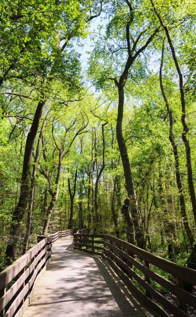 A boardwalk trail through Trap Pond State Park in Delaware.