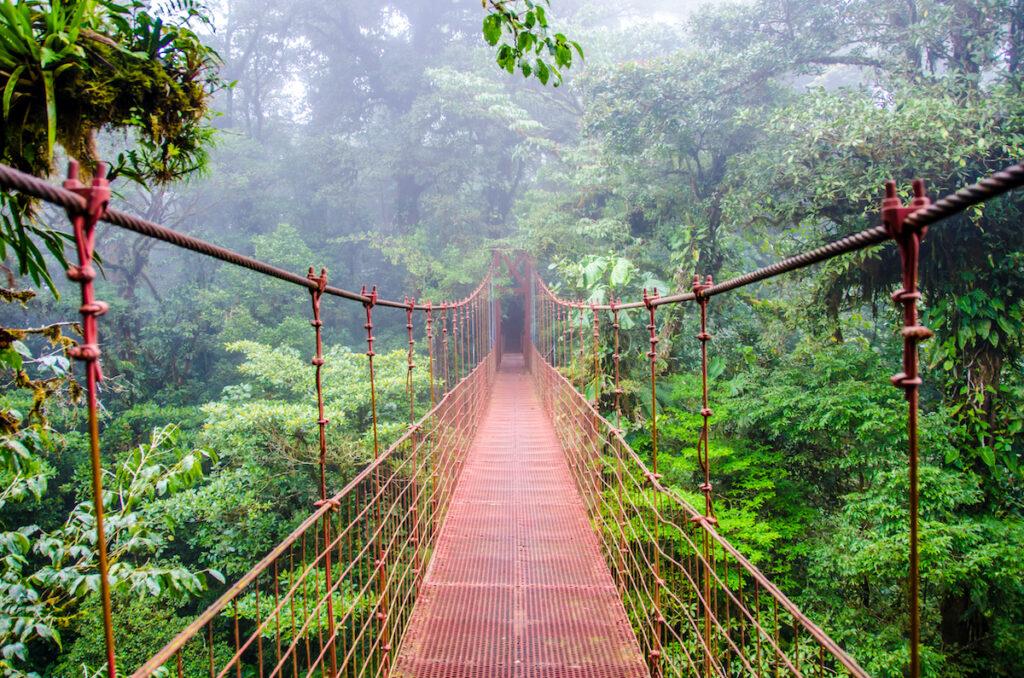 A bridge through the rainforest in Costa Rica.
