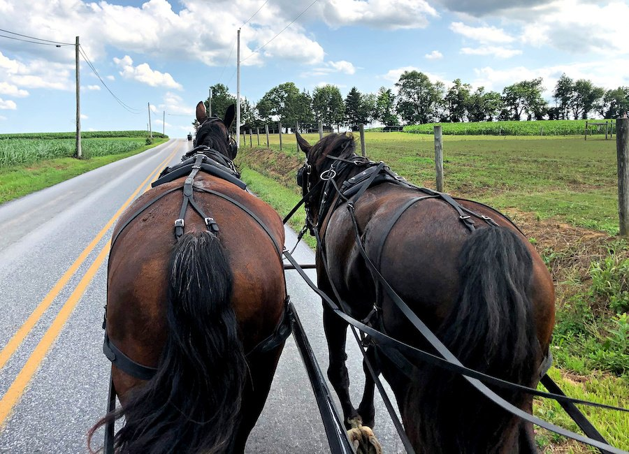 A buggy ride from AAA Buggy Rides in Lancaster.