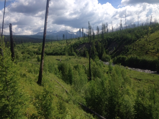 A burn area at Logging Lake.