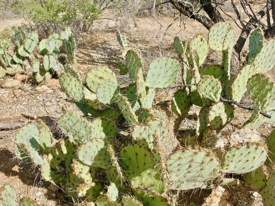 A cactus in Arizona.