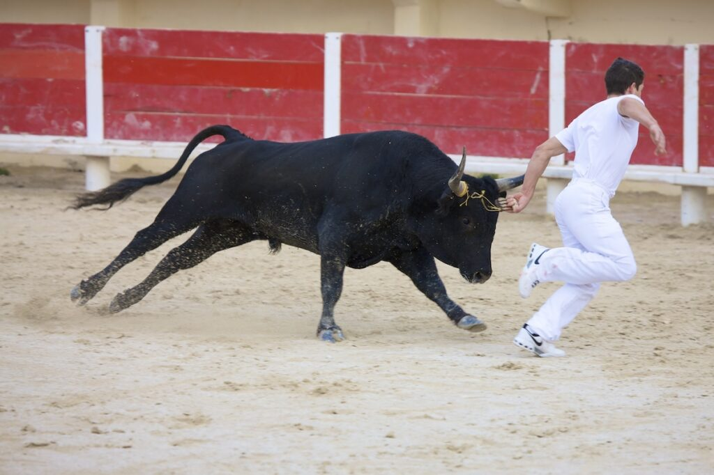 A Camargue bullfighter in France.