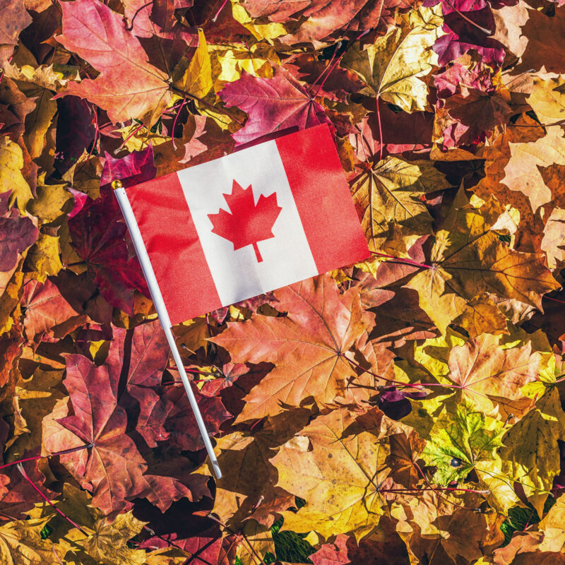 A Canadian flag lying in a pile of colorful fall leaves.