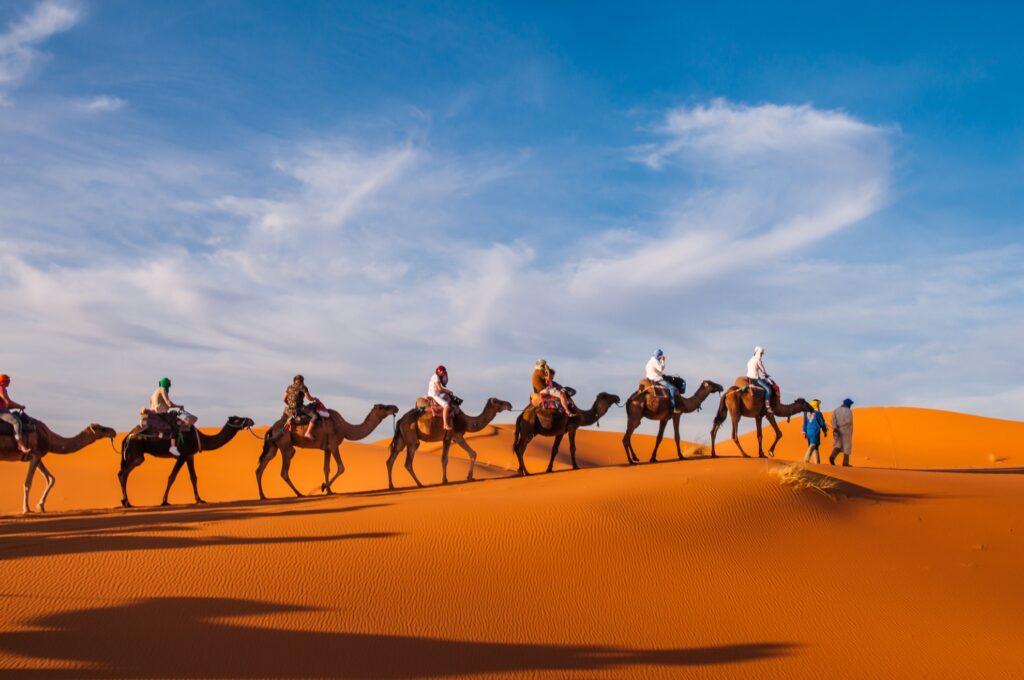 A caravan of camels in the Moroccan desert.