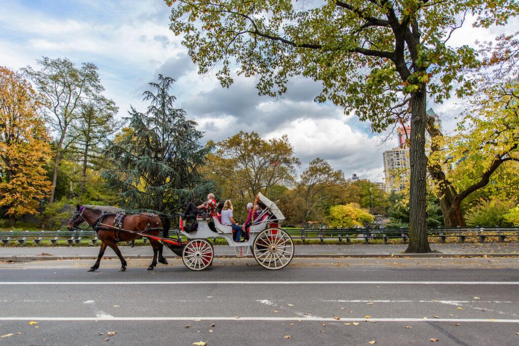 A carriage ride through Central Park.