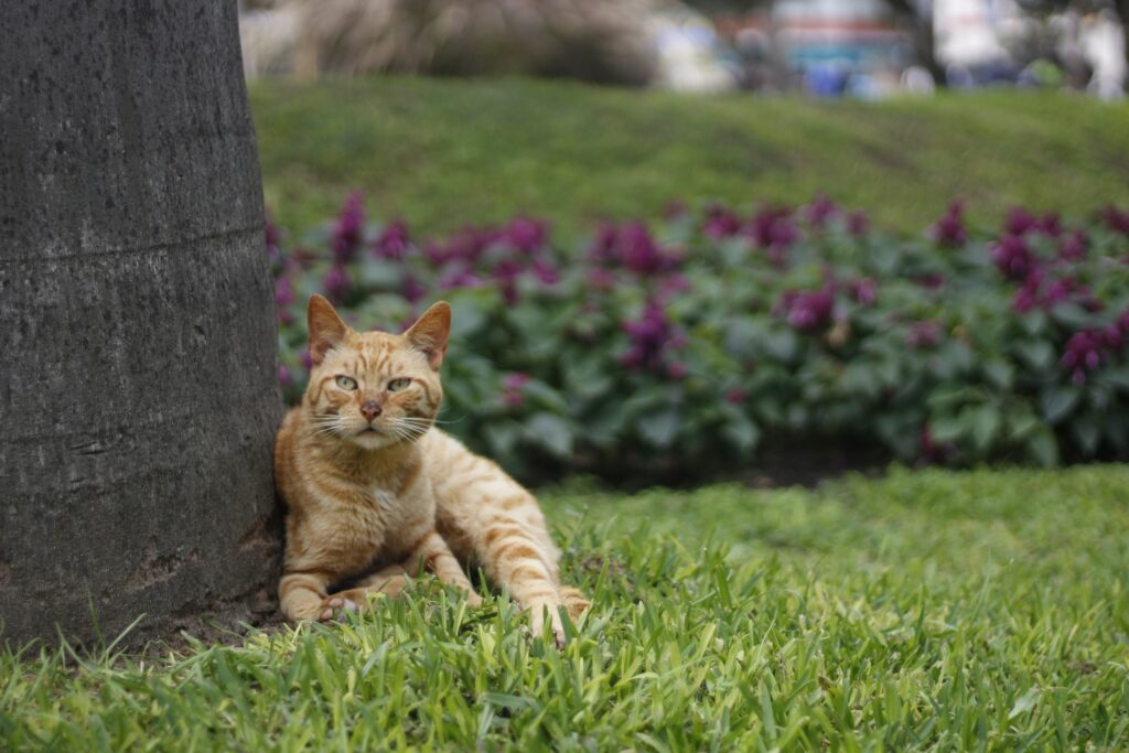 A cat in Lima's Kennedy Park.