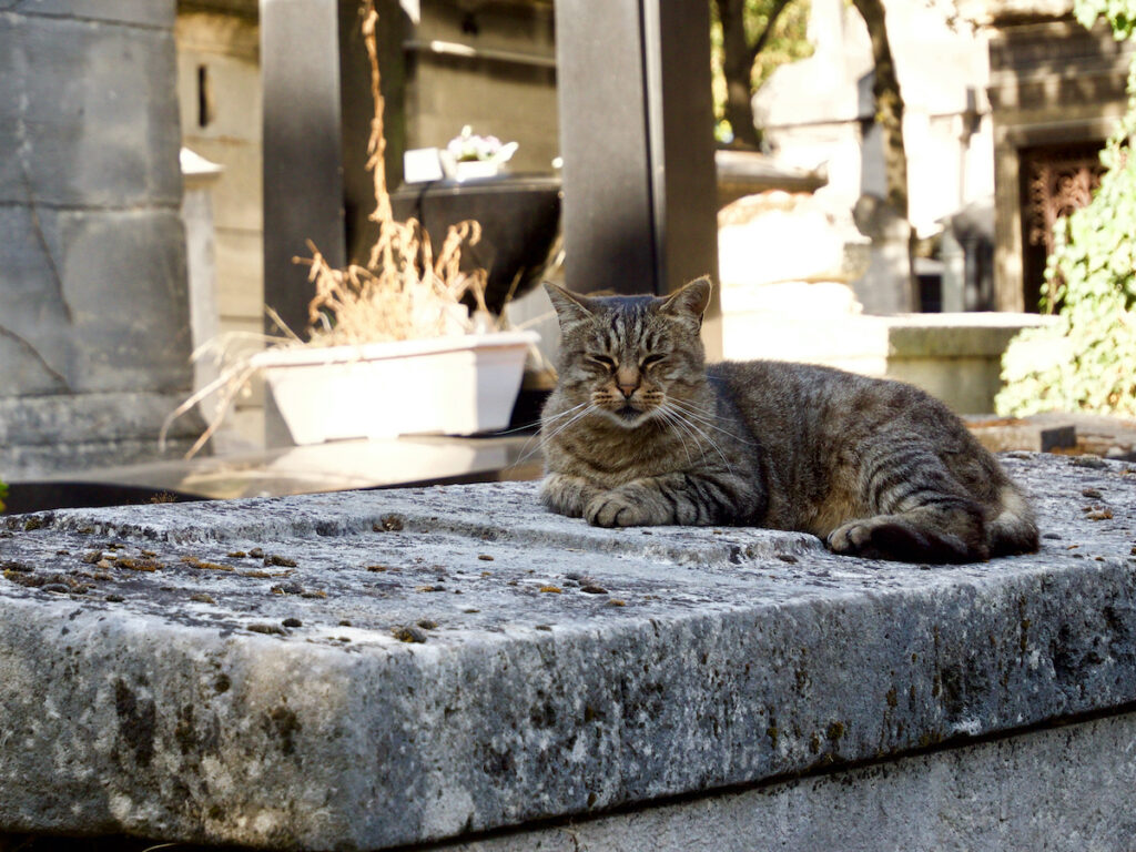 A cat in Montmartre Cemetery.