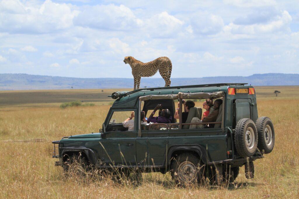 A cheetah on top of a safari jeep.