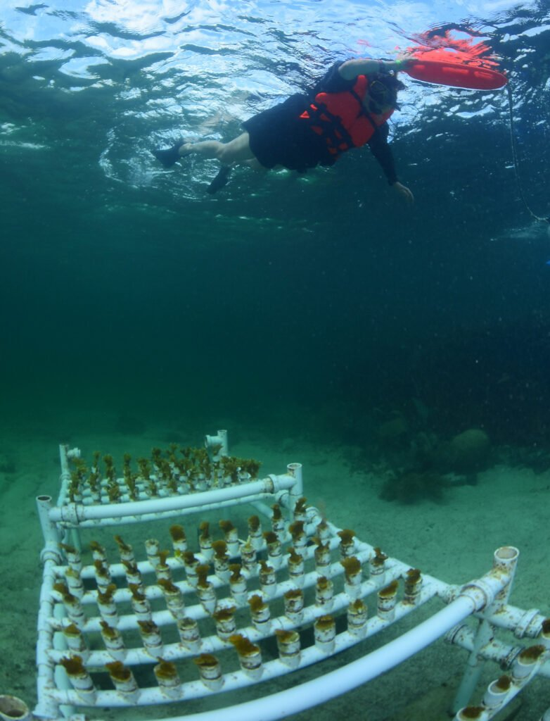 A coral reef conservation effort in the Mexican Caribbean.