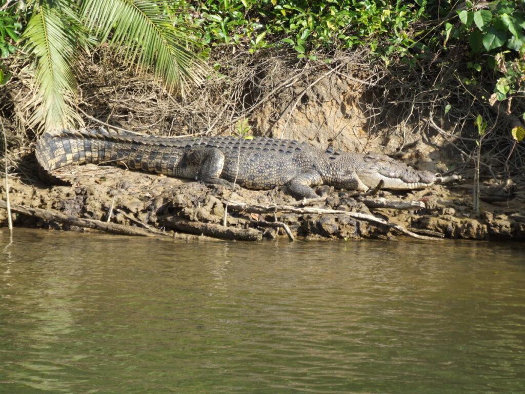 A crocodile river cruise in Queensland.