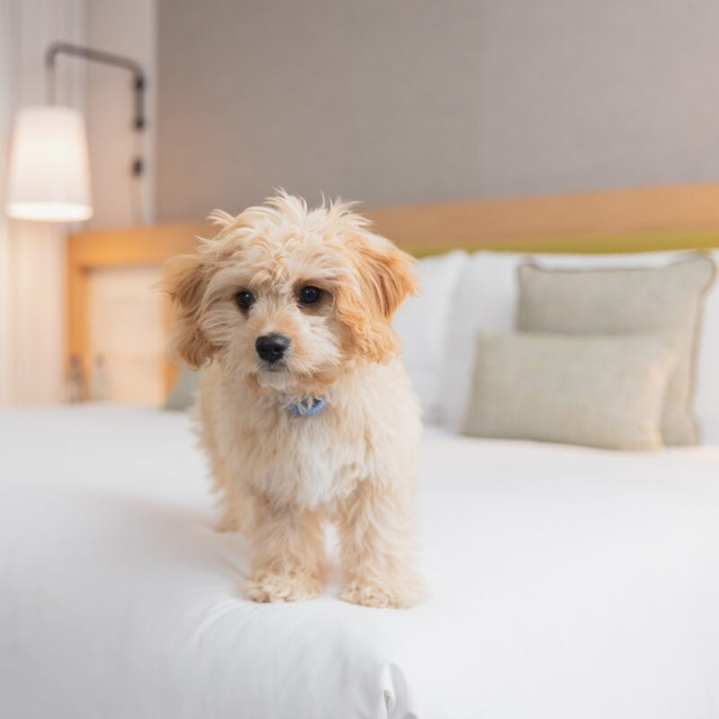 A dog at a Hotel and Spa.