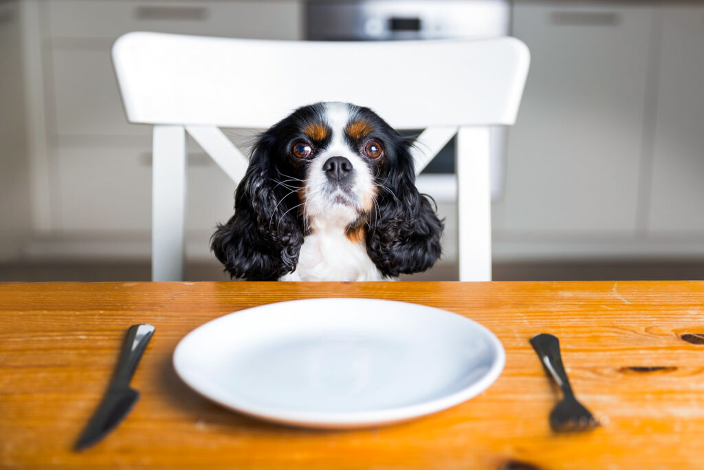 A dog at the dinner table.