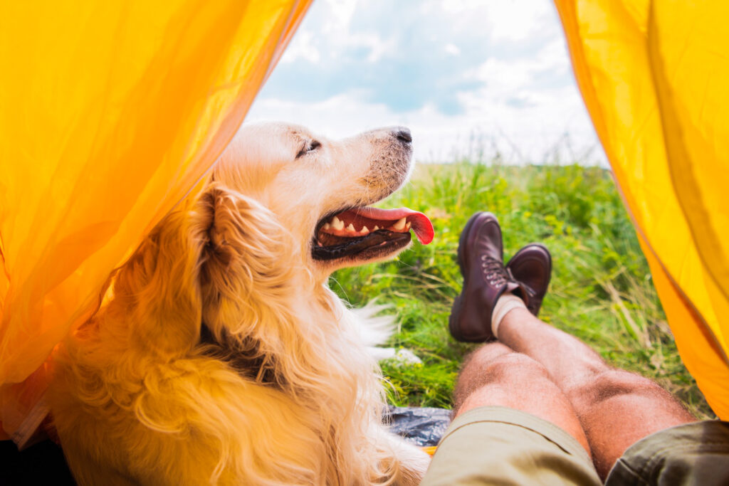 A dog camping with a traveler.