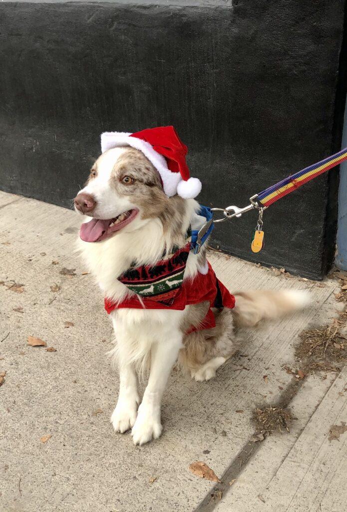 A dog dressed as Santa in Tunkhannock.