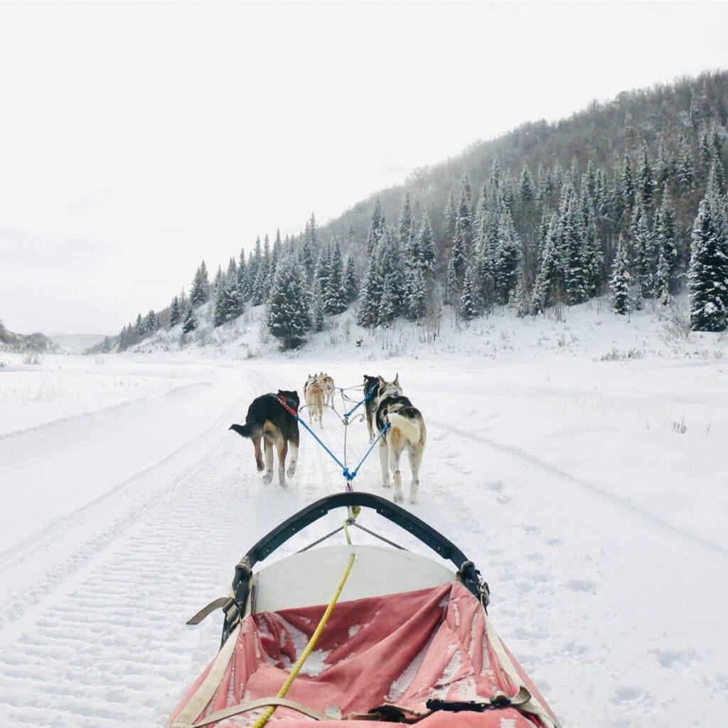 A dog sled ride in Breckenridge, Colorado
