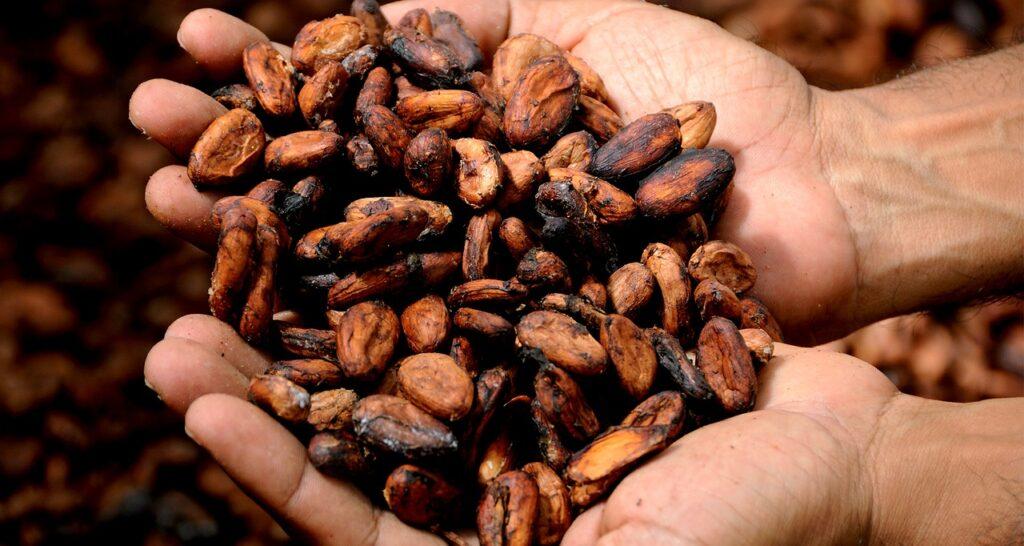 A farmer holding cacao beans.