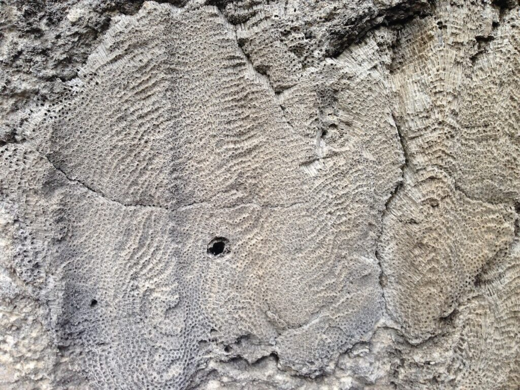 A fossil at Windley Key Fossil Reef Geological State Park.