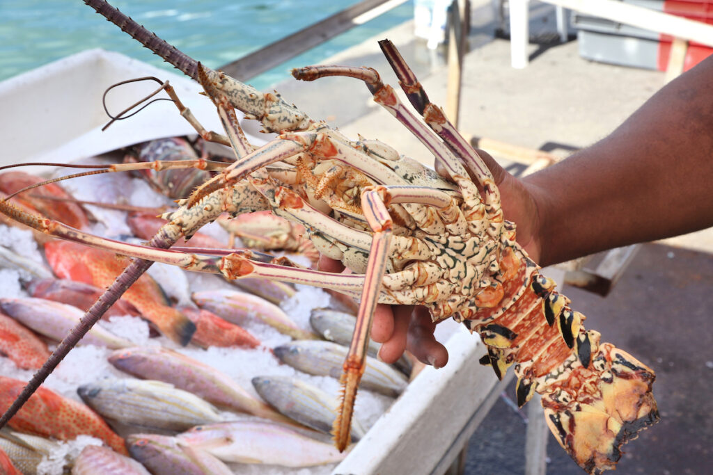 A fresh lobster at the Guadeloupe fish market.