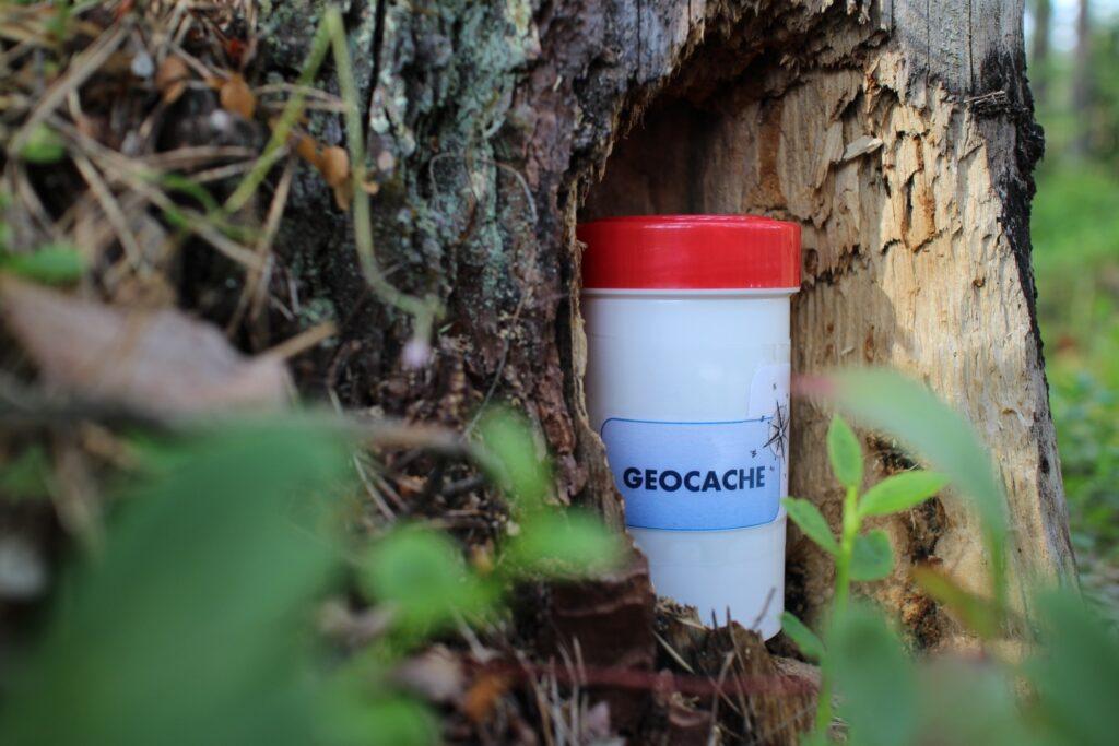 A geocache hidden in a tree.