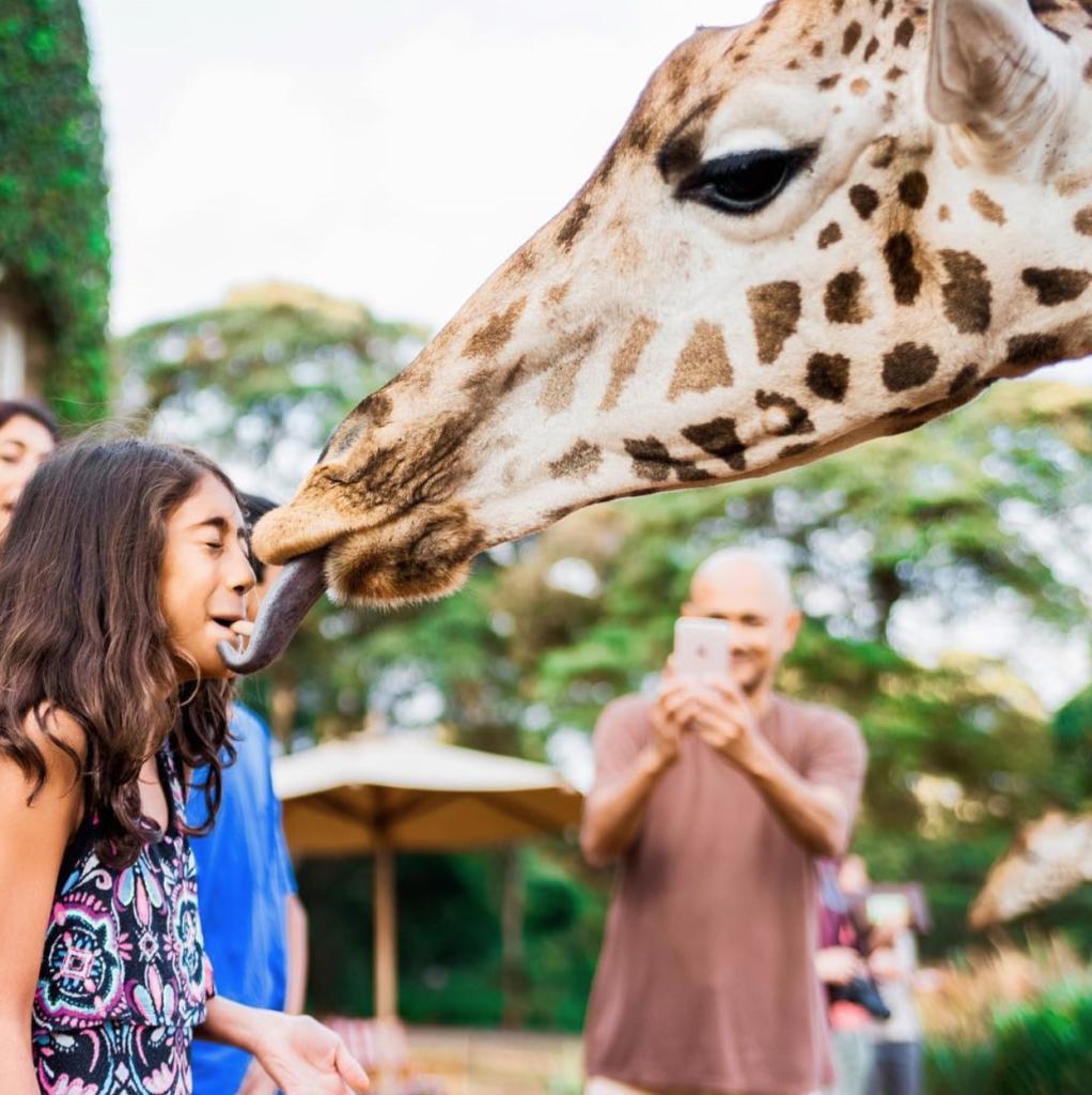 A giraffe licks a girl's face at the Manor.