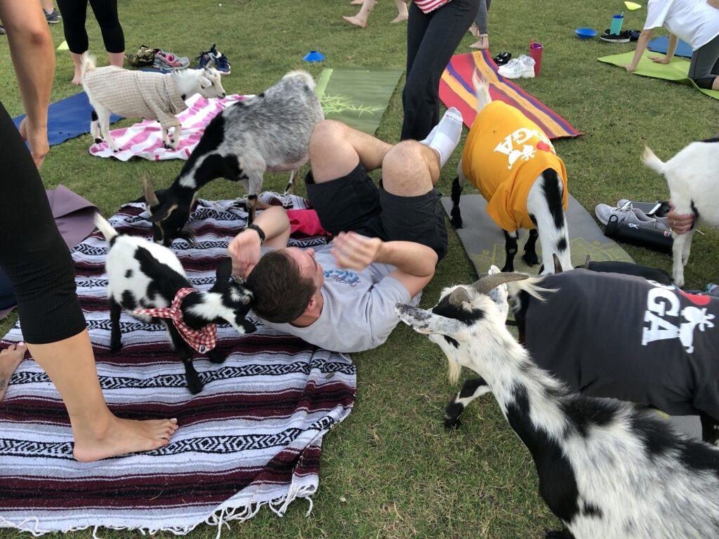 A goat yoga participant surrounded by goats.