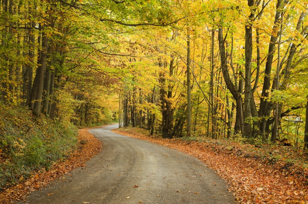 A gravel road near the Finger Lakes in New York.