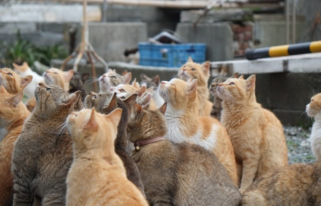 A group of cats on Cat Island.