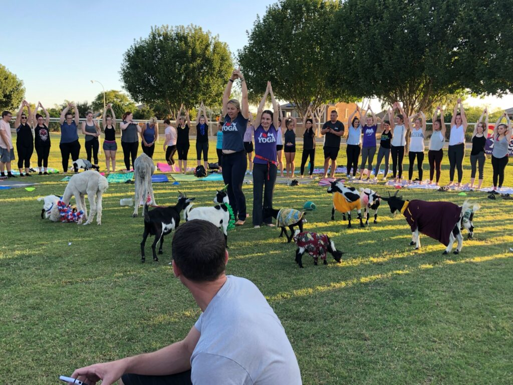 A group photo of the goat yoga class.