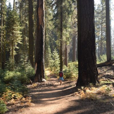 A hiker in Sequoia National Park.