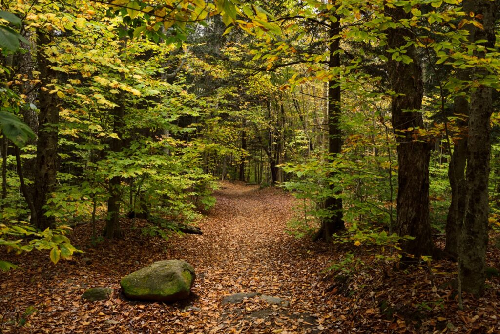 A hiking trail in Stowe, Vermont.