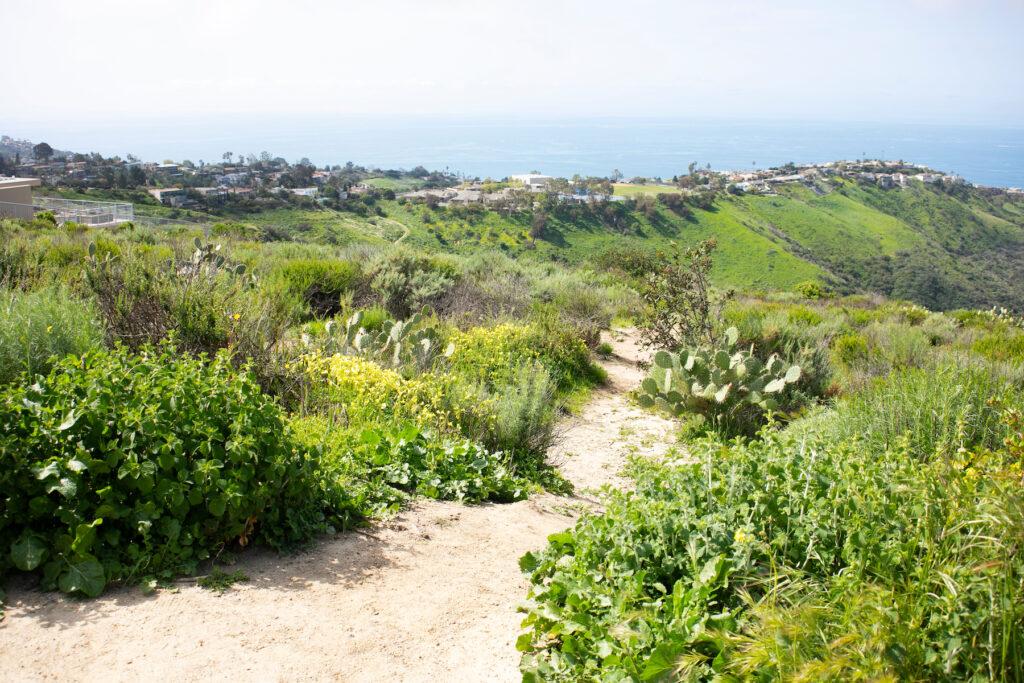 A hiking trail in the Laguna Coast Wilderness Park.