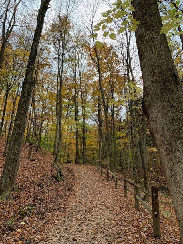 A hiking trail through Asbury Woods.