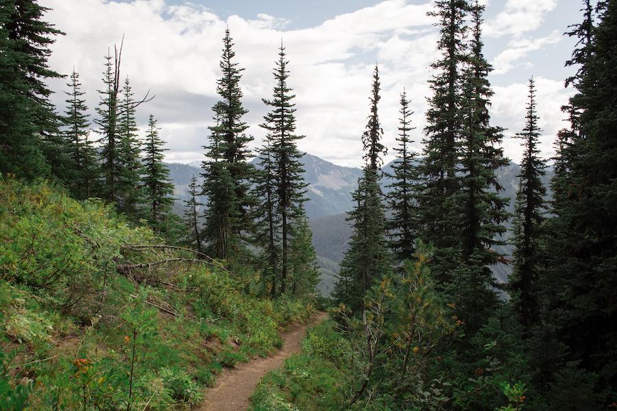 A hiking trail through E.C. Manning Provincial Park.