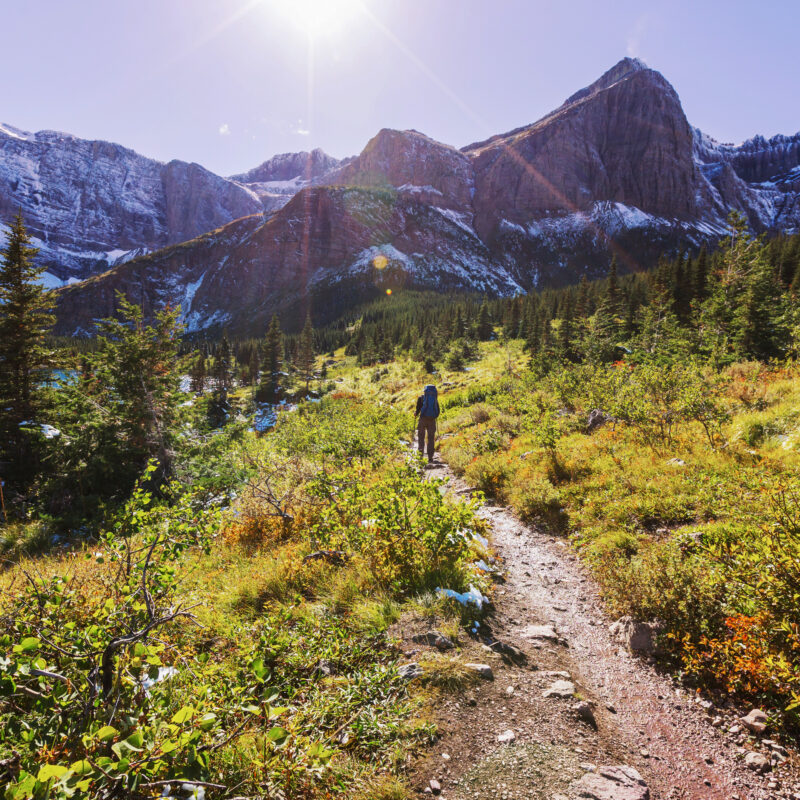 A hiking trail through Glacier National Park.