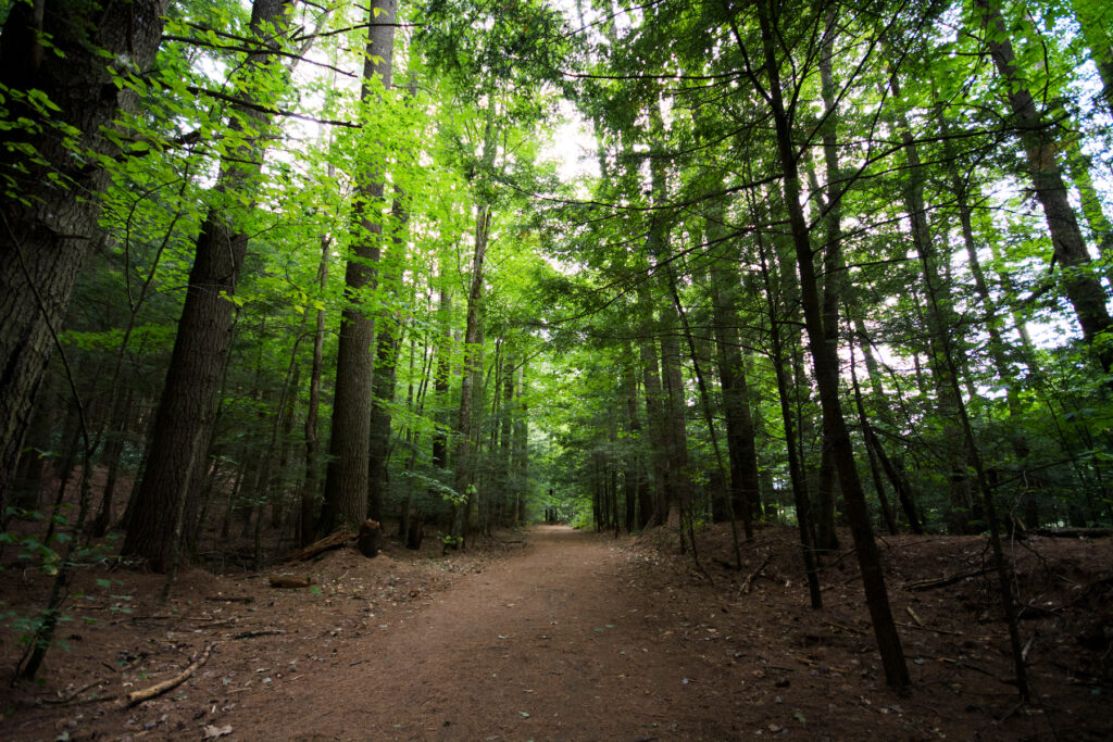 A hiking trail through the woods of Lake George.
