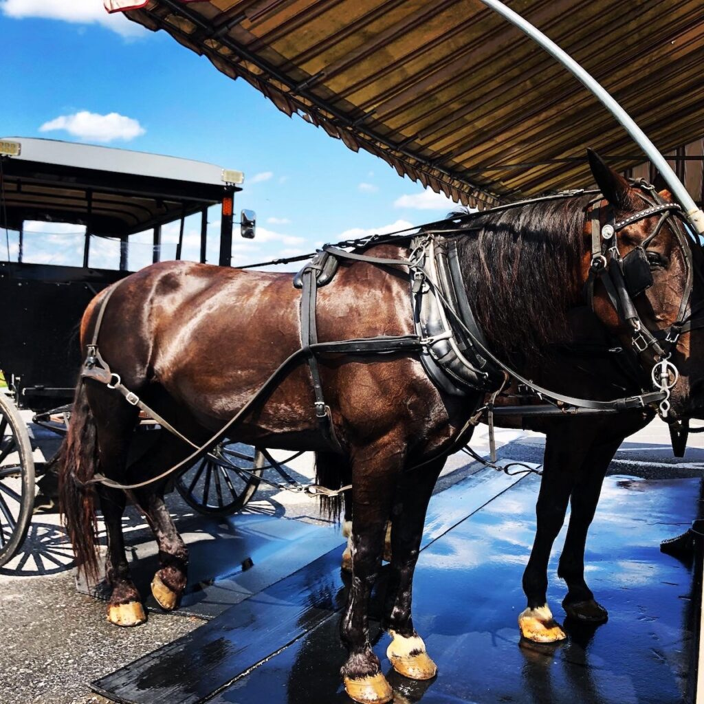 A horse and buggy ride in Lancaster.