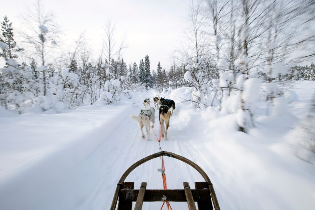 A husky sled ride in the Swedish Laplands.